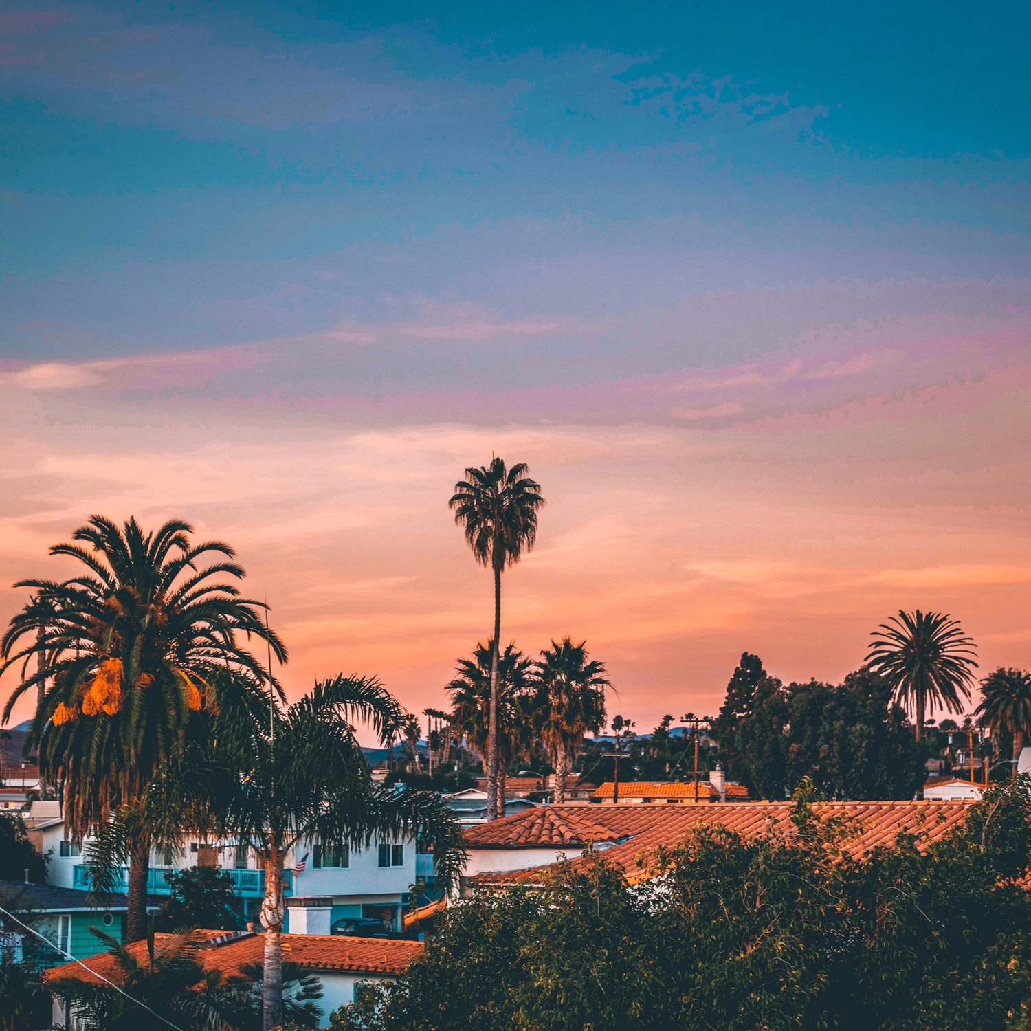 j1-san-diego-palm-trees