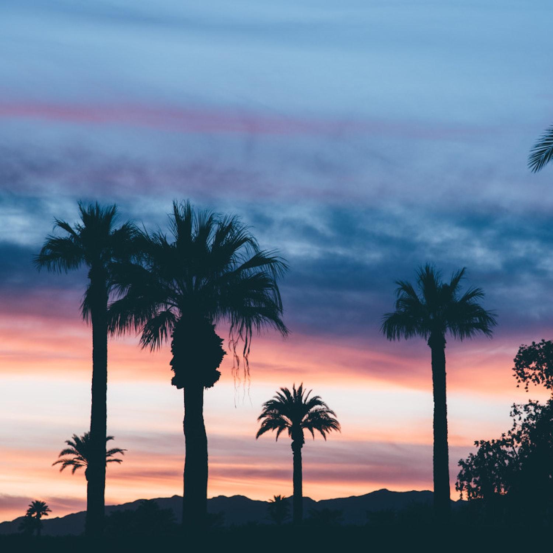 J1-Myrtle-Beach-palm-trees
