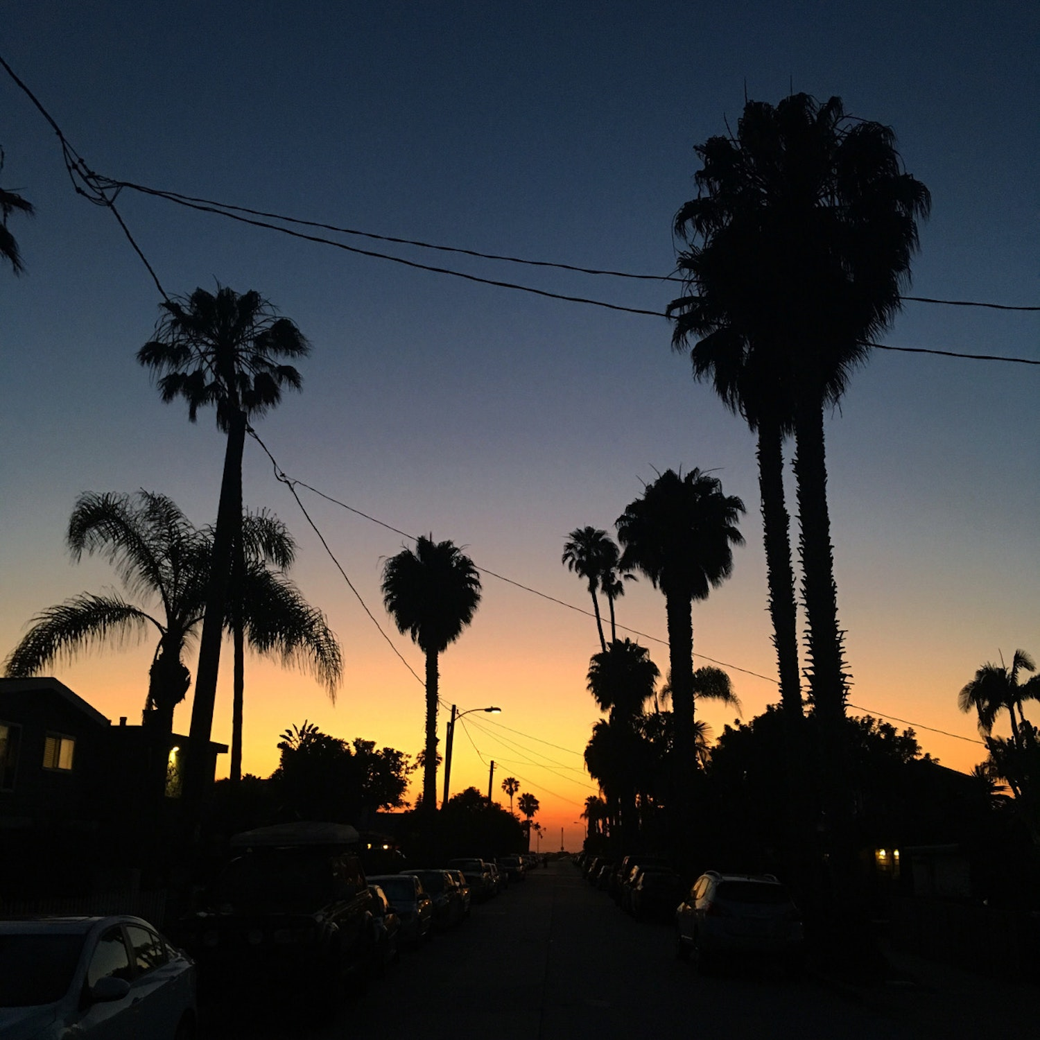 palm trees at twilight